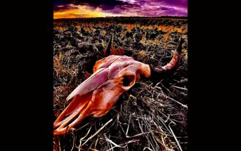 Dakota Blood Stampede by Shotgun Facelift